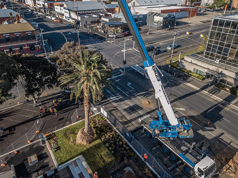 Crane lowering Palm Tree into the ground before securing